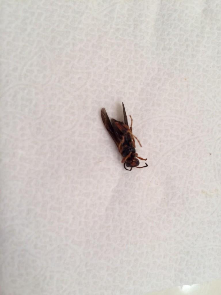 05-06-15 Wasp