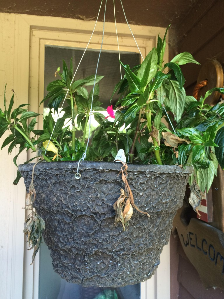 09-30-15 Terminally I'll hanging basket